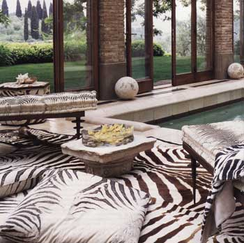opt-pool-side-zebra-1.jpg