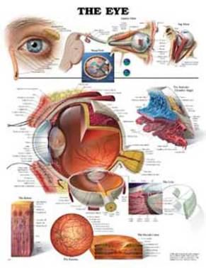 opt-human-eye-poster.jpg