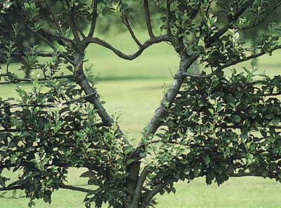 opt-tree-valentines-day.jpg