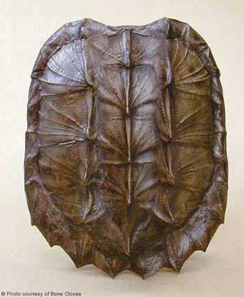 Stylefile 36 Turtle Shells Nibs