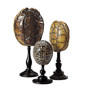 ballard-design-shells