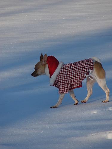зимната мода за кучета