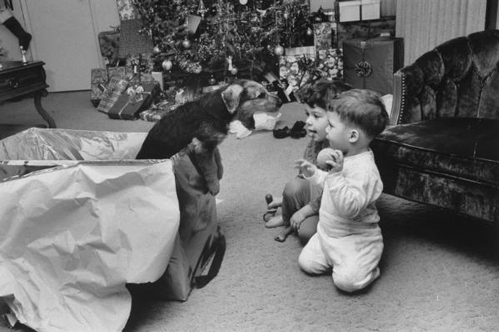 puppy-xmas-gift-1972-opt