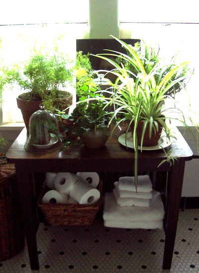 houseplants-opt