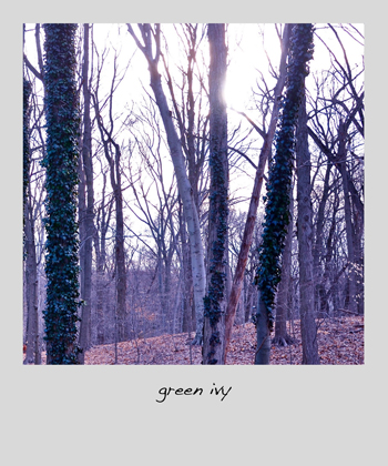 greenivy02-opt