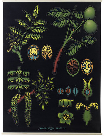 ikea-bontanical-poster02-opt
