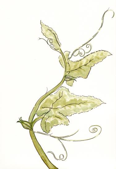 watercolorandinksquashvinegarden-opt