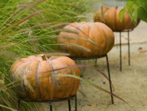 pumpkin-stand-terrain-opt