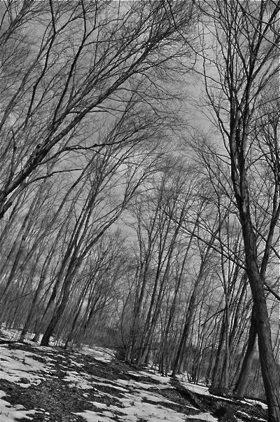 winterthawtrees-opt