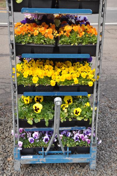 springflowersforsale-opt