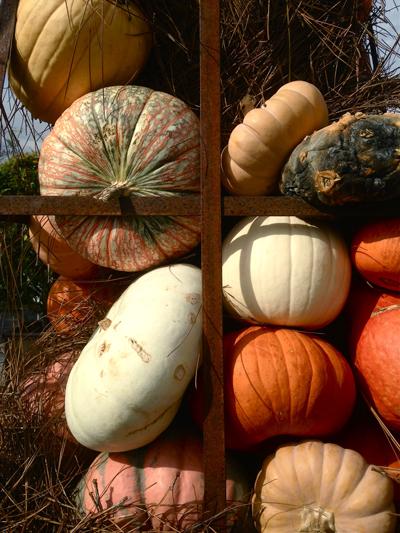 pumpkinsindisplay