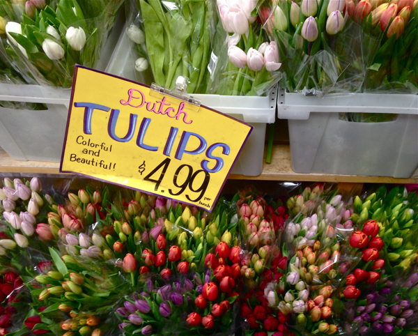 dutchtulipsgrocerystore-opt