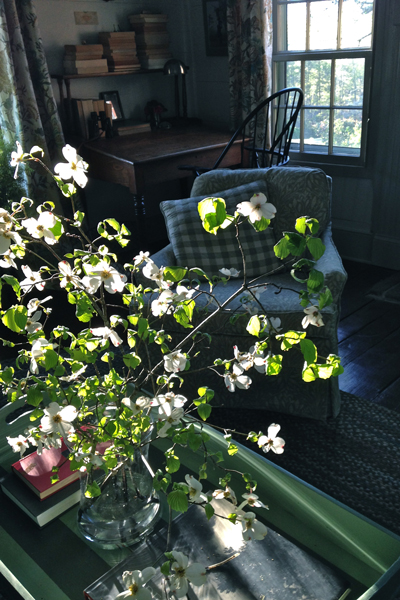 dogwoodblossomsmorninglight-opt