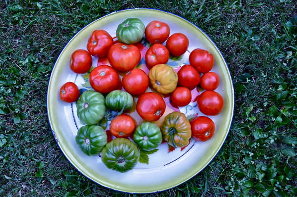 homegrowntomatoes-opt