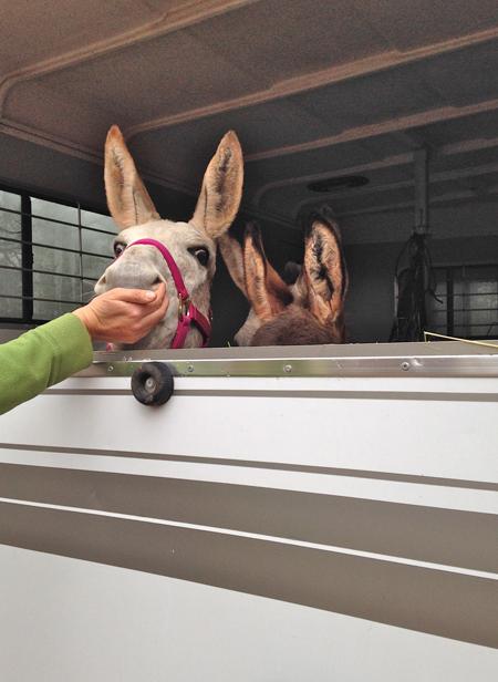 donkeysarrivetofarm-opt