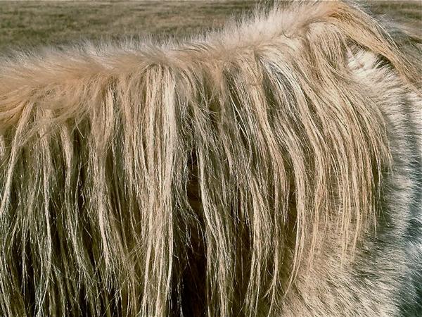 horsemane-opt