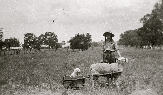 sheepcart