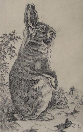 rabbit-etching-opt